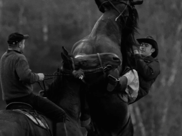 horse riders (3)